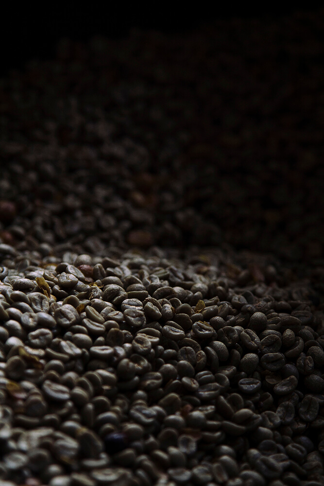 Luego de secarse al sol dentro de su fruto, el grano de café es extraído del mismo por una máquina llamada chancadora.