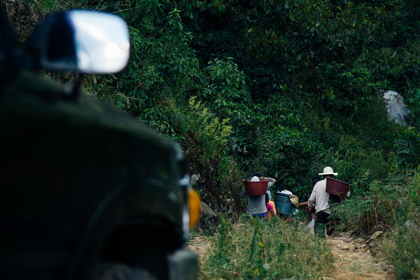 Los recolectores de café en la zona de San Pedro de Rivas de Pérez Zeledón son indígenas Borucas, habitantes de la zona o inmigrantes panameños.