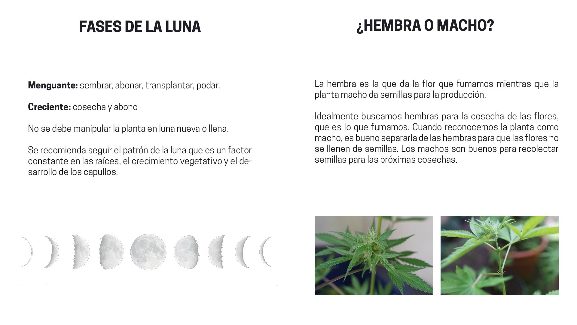 Moderno Patrones Que Hacen Punto Libres Para Flores Patrón - Ideas ...